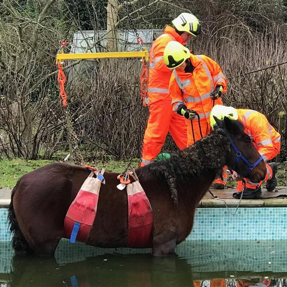Winch way? The frightened horse is thought to fallen into the pool in the dark PICTURE: WESSEX NEWS AGENCY