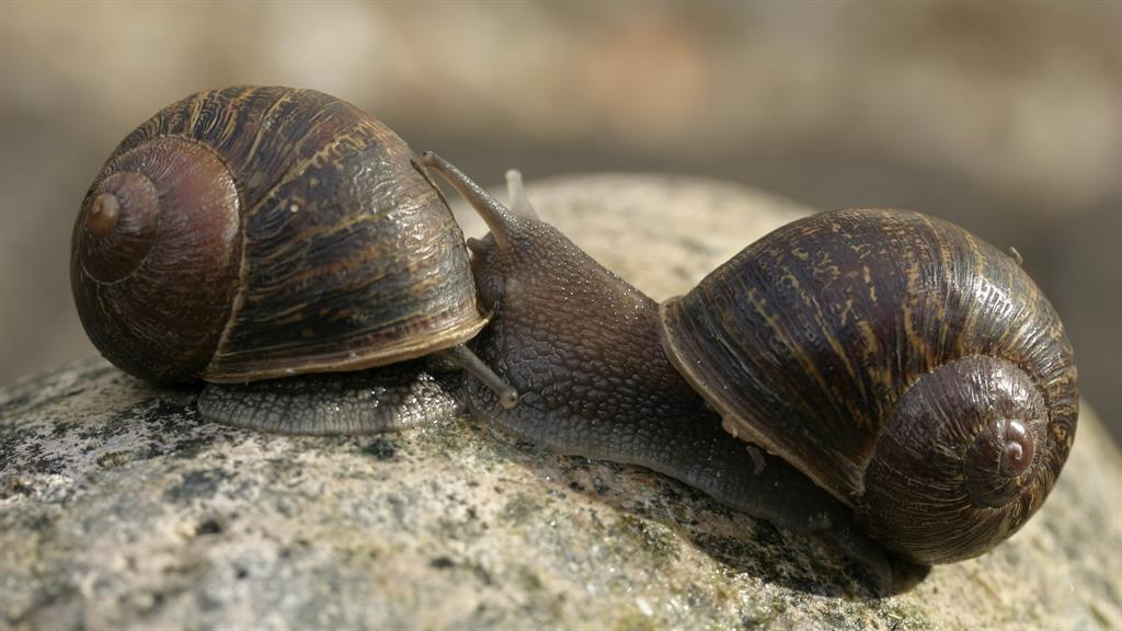 How Jeremy the lonely snail showed that two lefts make a ...