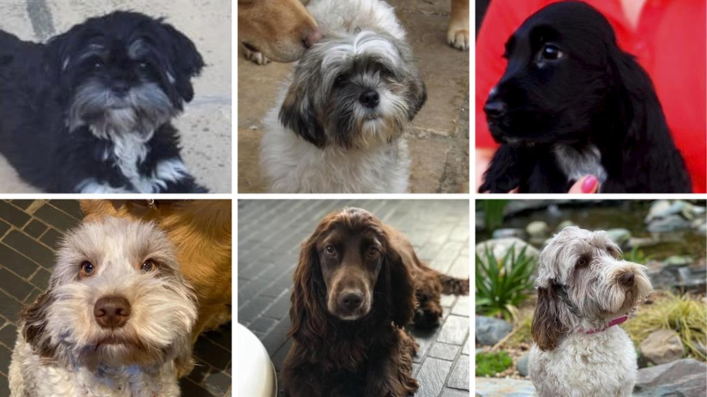 Stolen: Six of the dogs taken from the boarding kennels PICTURES: SWNS