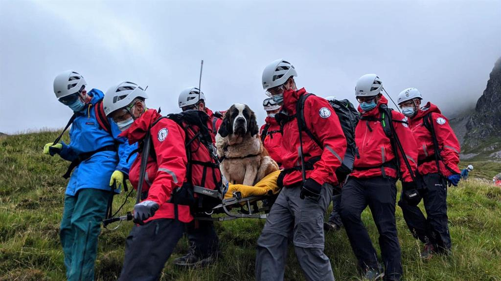 Oops-a-Daisy: Volunteers strap the giant pooch on to a stretcher and carry her down Scafell Pike PICTURES: WASDALE MRT