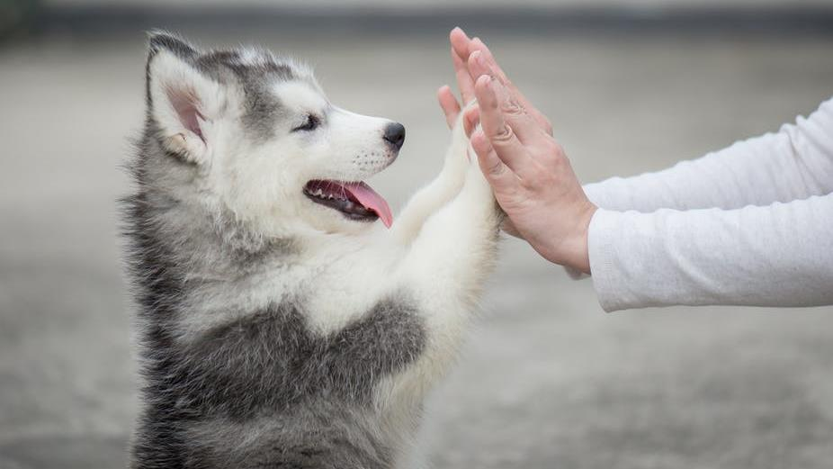 Hands-on: Key to the success of a long-term dog-owner relationship is building a good foundation PICTURE: SHUTTERSTOCK